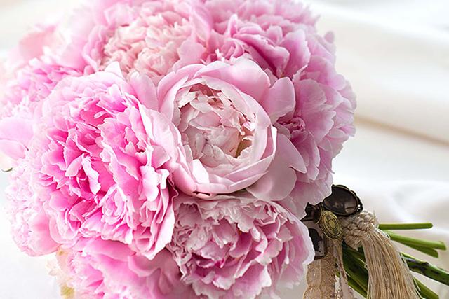 4〜6月の愛の花言葉を持つ花