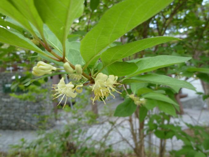 0510小さい花.JPG