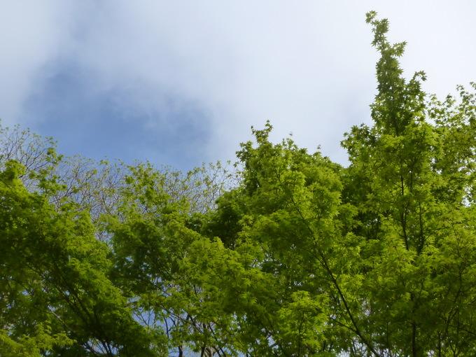 0510緑.JPG