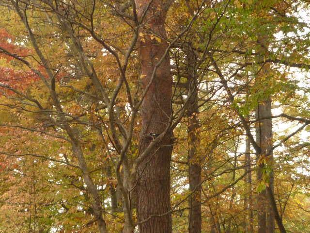 1027樹木の紅葉.JPG