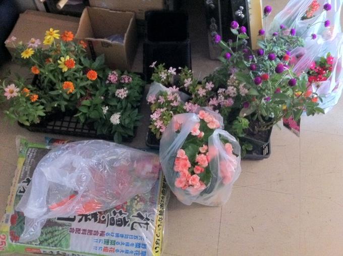 お花使用前.jpg