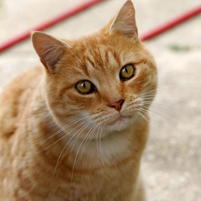 Cute Cat Here