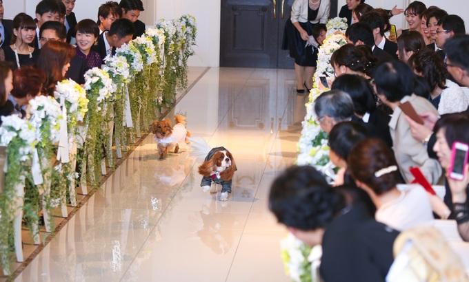 大切な家族と一緒に♪リングドッグ!【高知の結婚式場ララシャンス迎賓館】