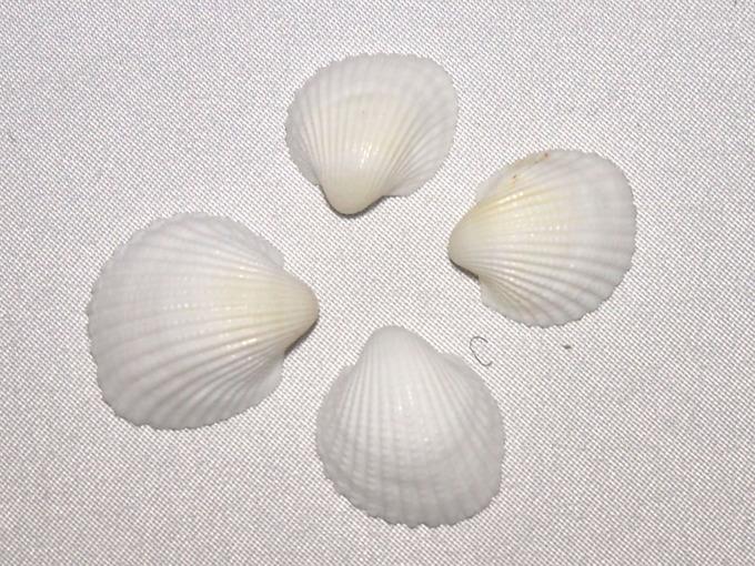 shell04_01.jpg