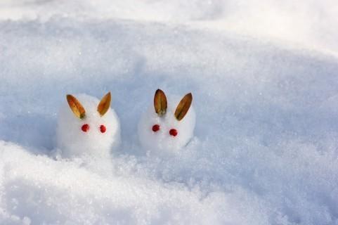 雪ウサギ.jpg