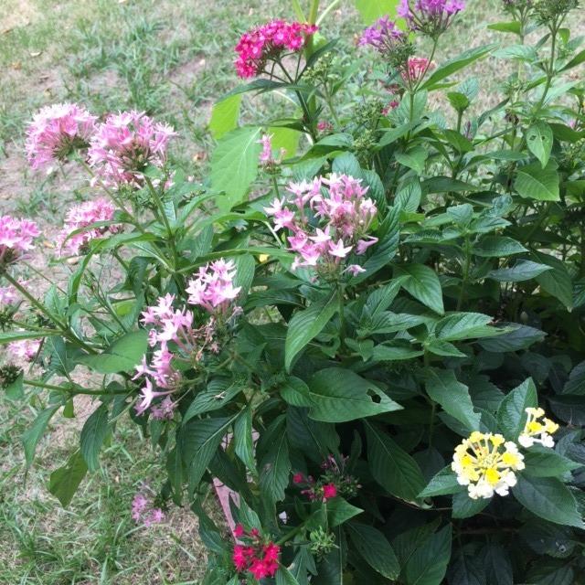 ガーデンのお花