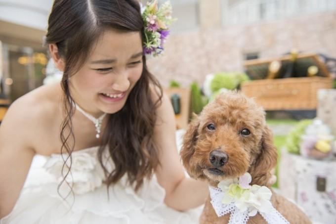 ナチュールブログ用 犬.jpg