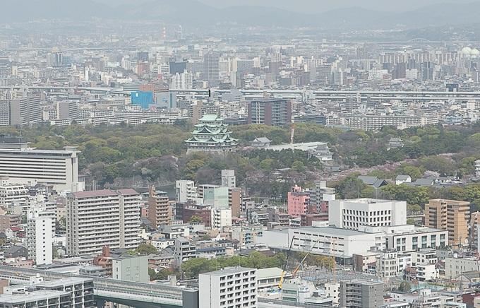 桜(名古屋城).jpg