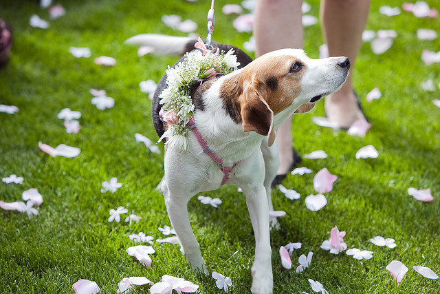 wedding_dogs03.jpg