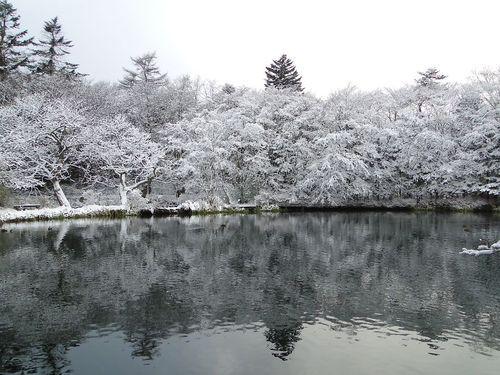 雲場池「雪」.jpg